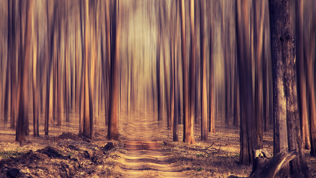 tree-dream
