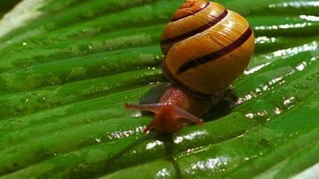 Video Short: Snail Slime Hero