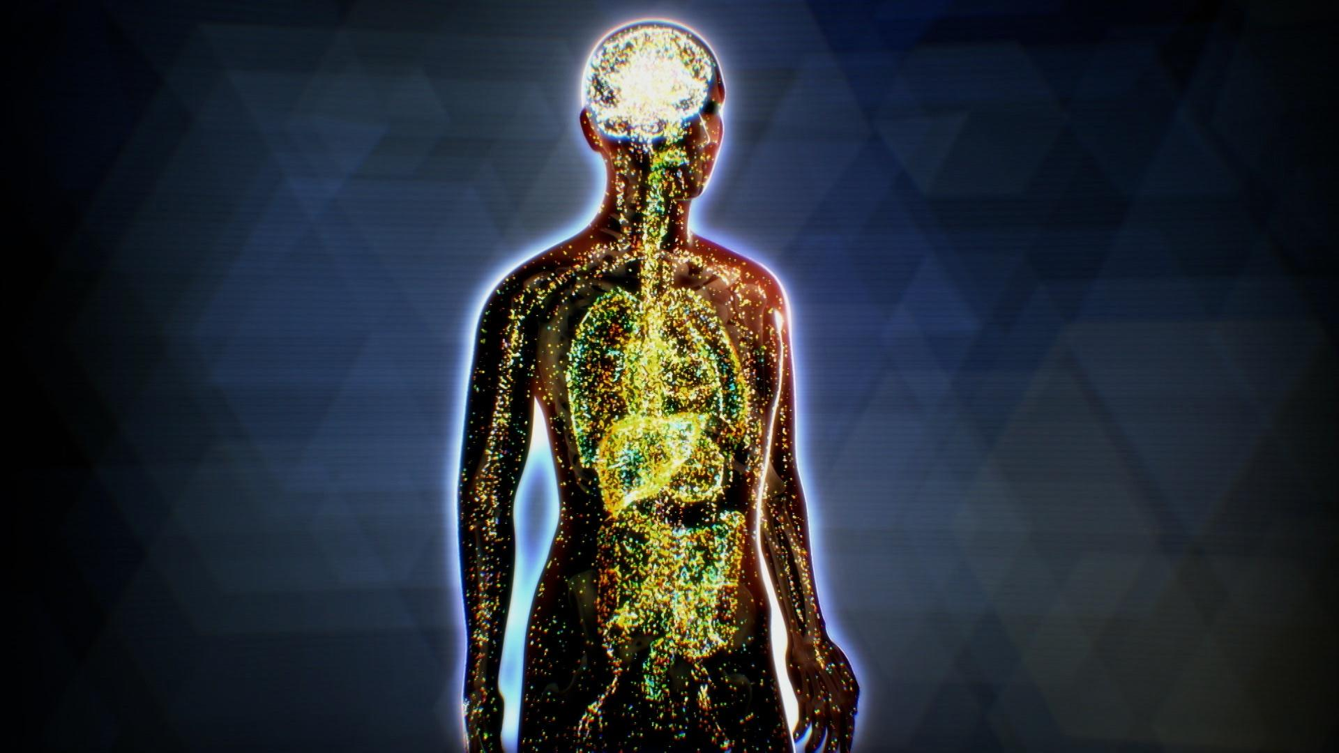What is the Endocannabinoid System? Hero