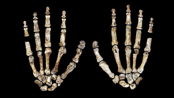 Why Did Homo naledi Bury Its Dead?