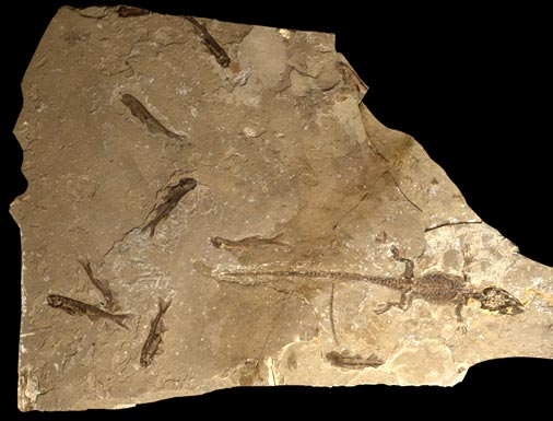 Champsosaur and fish