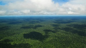 The Amazon, the Green Ocean