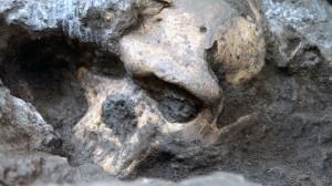 fossil-skull