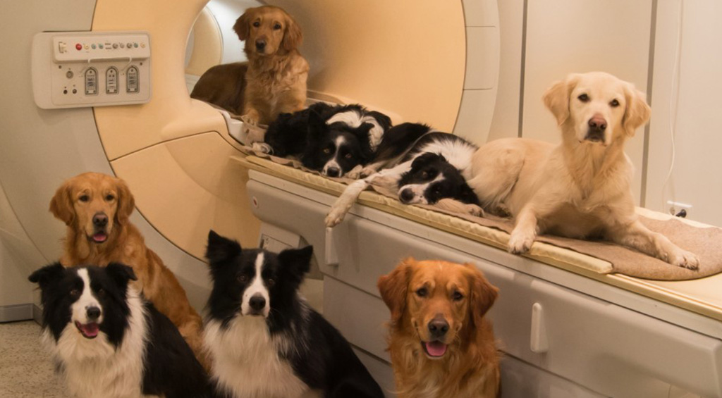 dogs-in-fmri2