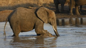 elephant-watering-hole3