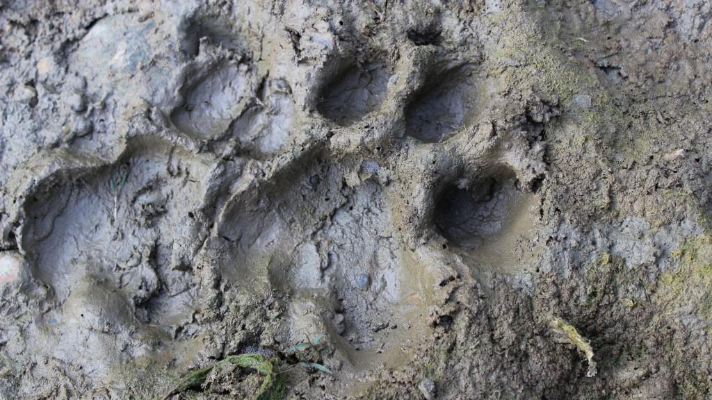 pugprint