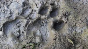 pugprint-1024x576