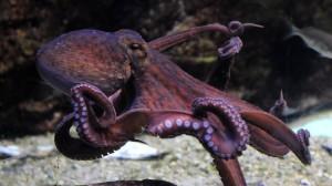 octopus-arms-1024x576