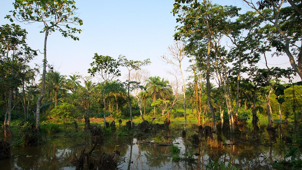 swamp-pond-1024x576
