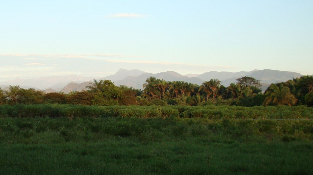 experimental-cassava-fields