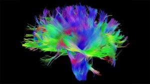 brain-wiring