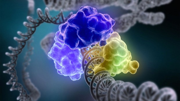 dna-repair-machinery