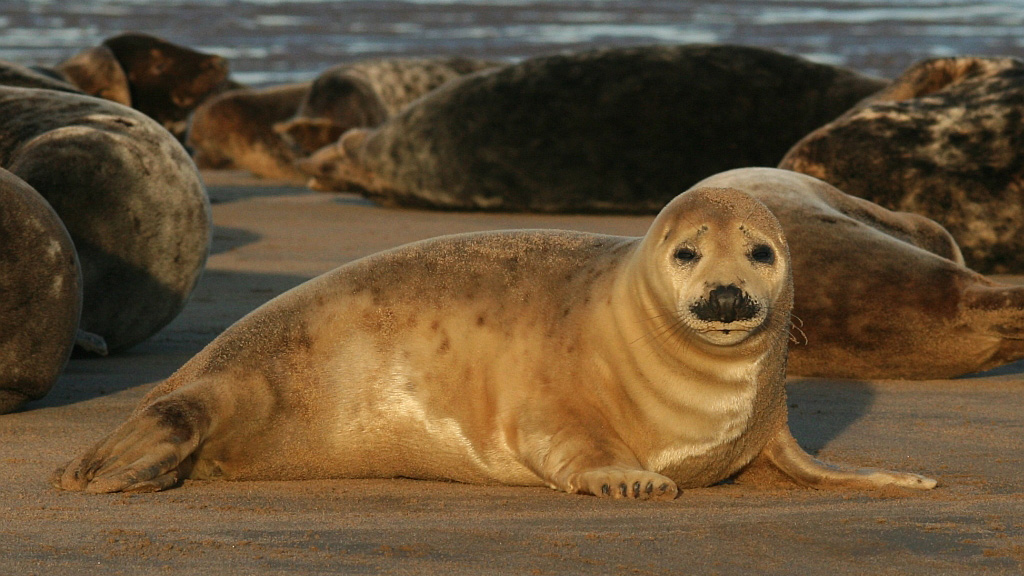 seal-pup_1024x576