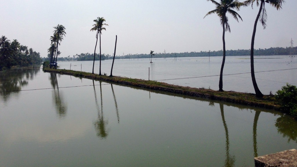 shrimp ponds Neendakara