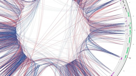 Chromosome 22 transcriptional network