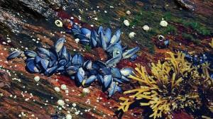 mussels-underwater_1024x576