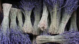 lavender_1024x576