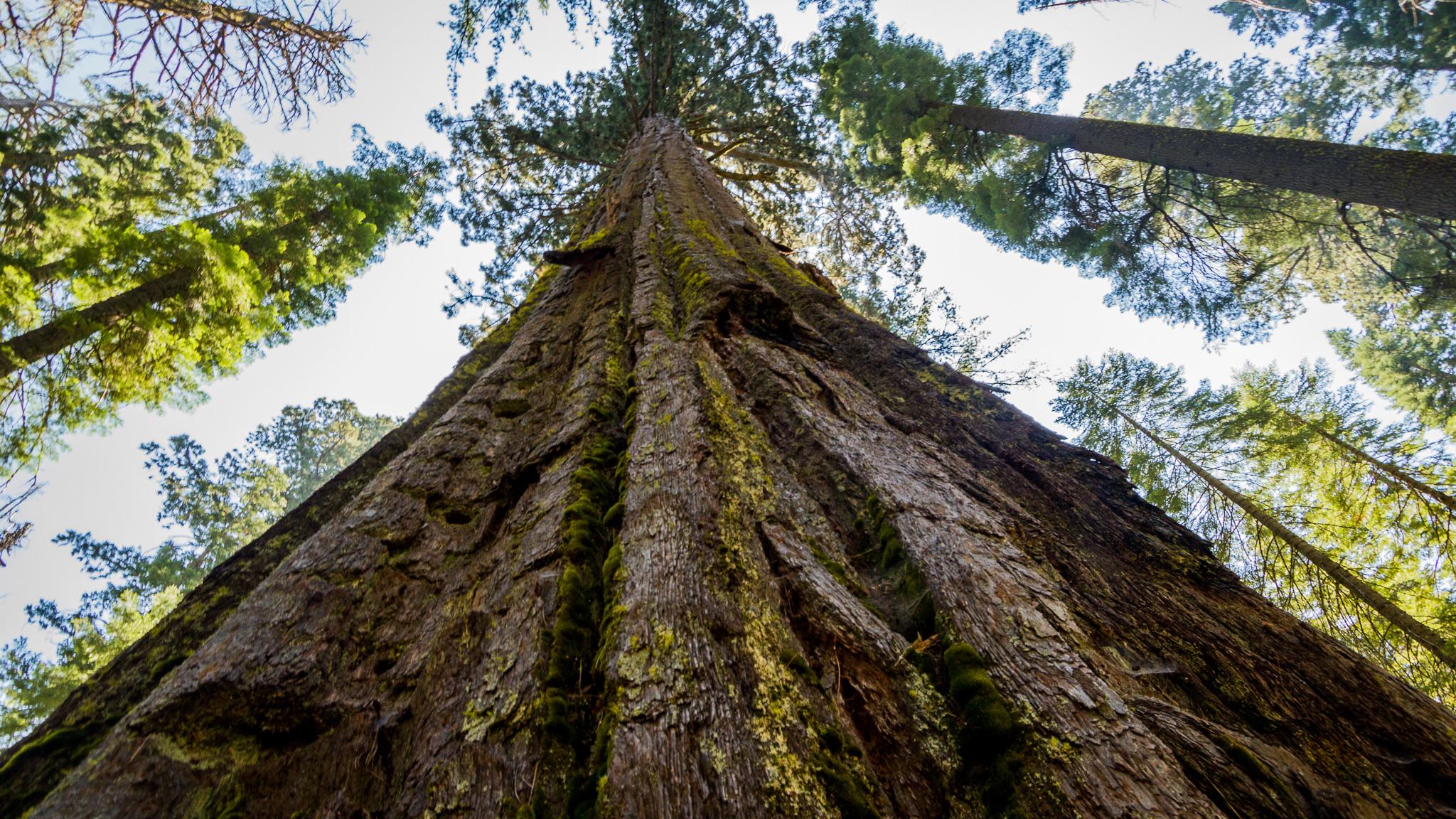 Big Tree Service