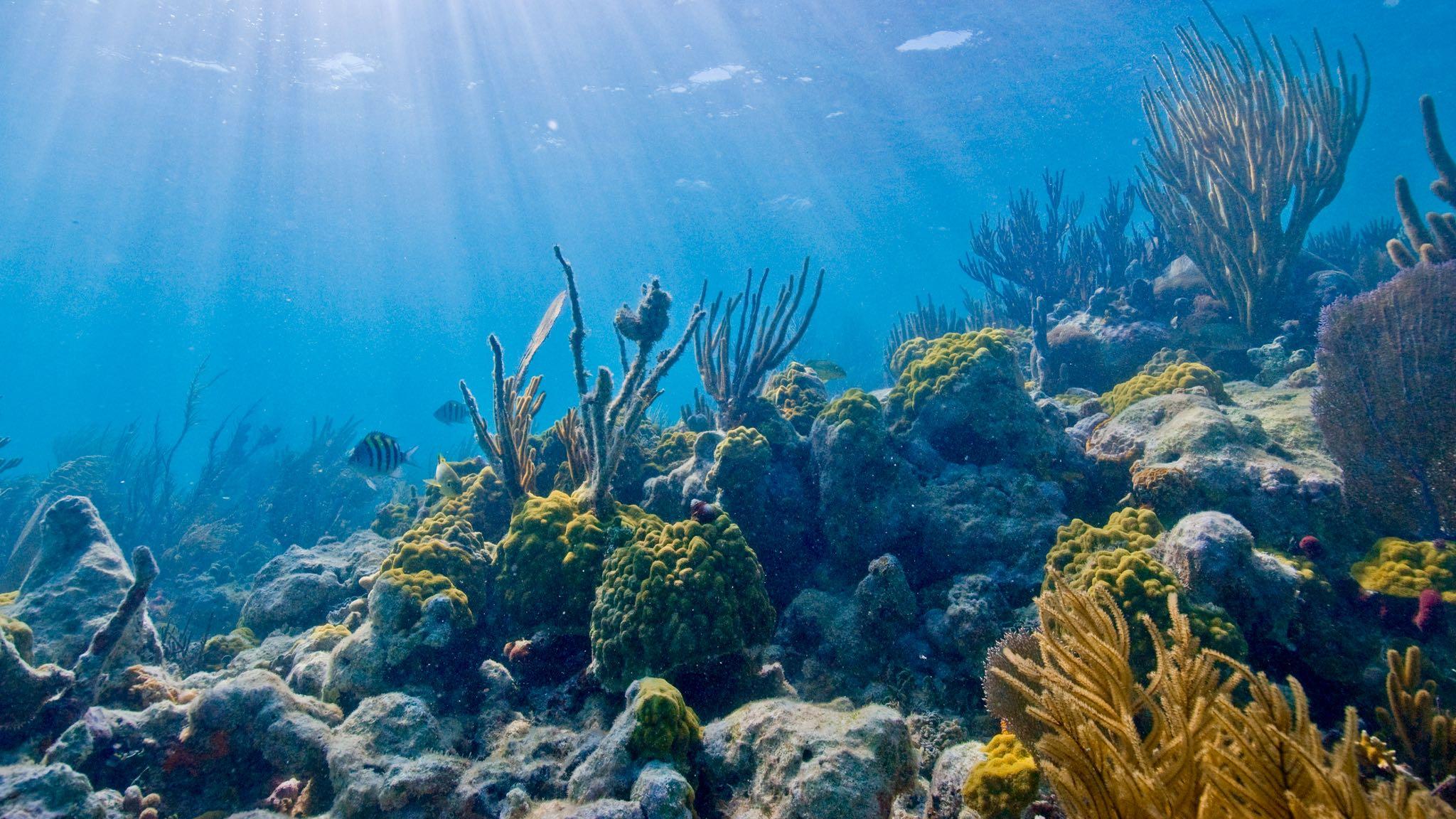 biscayne-reef