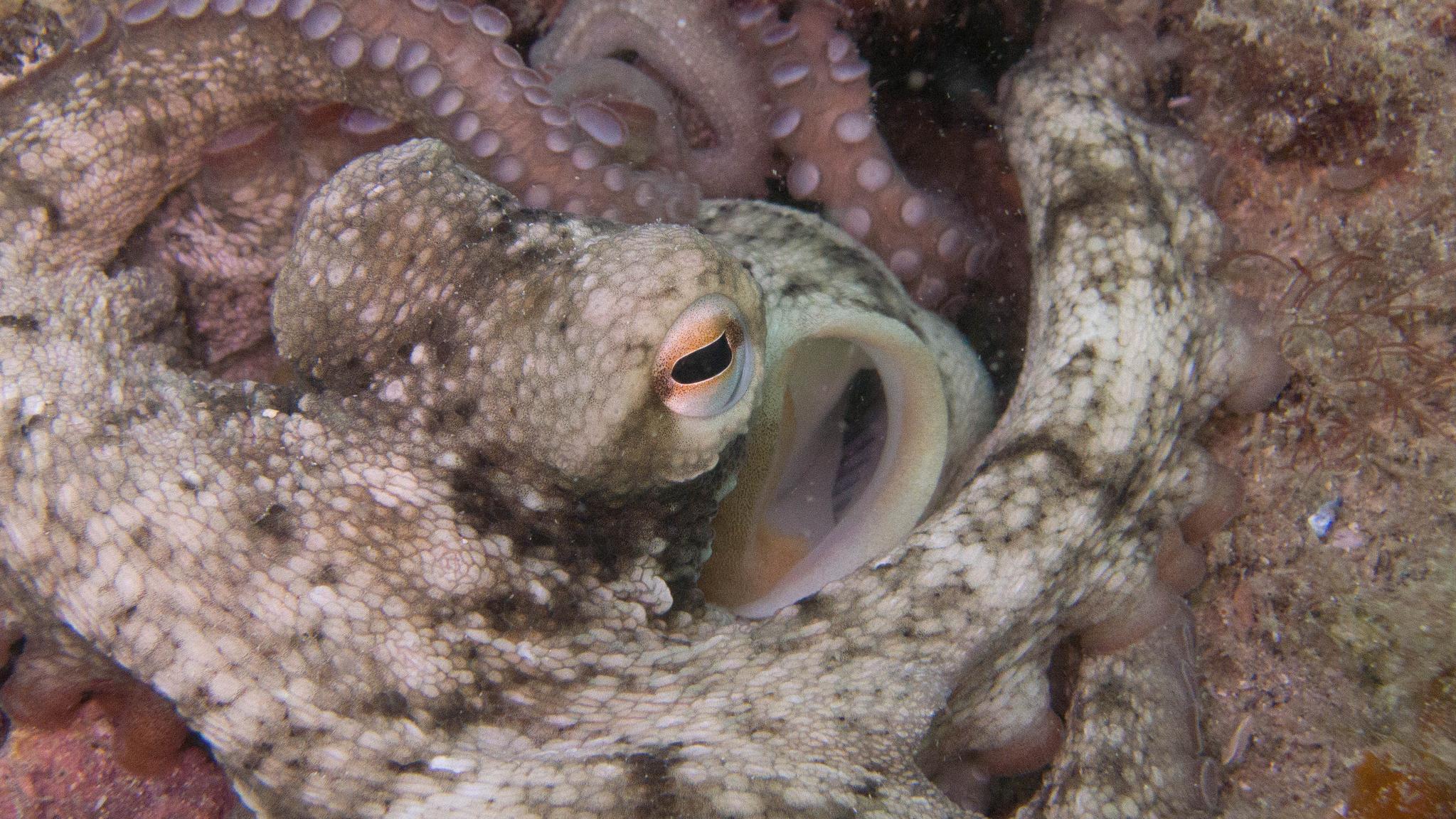 gloomy-octopus_2048x1152