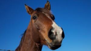 horse-smile_2048x1152