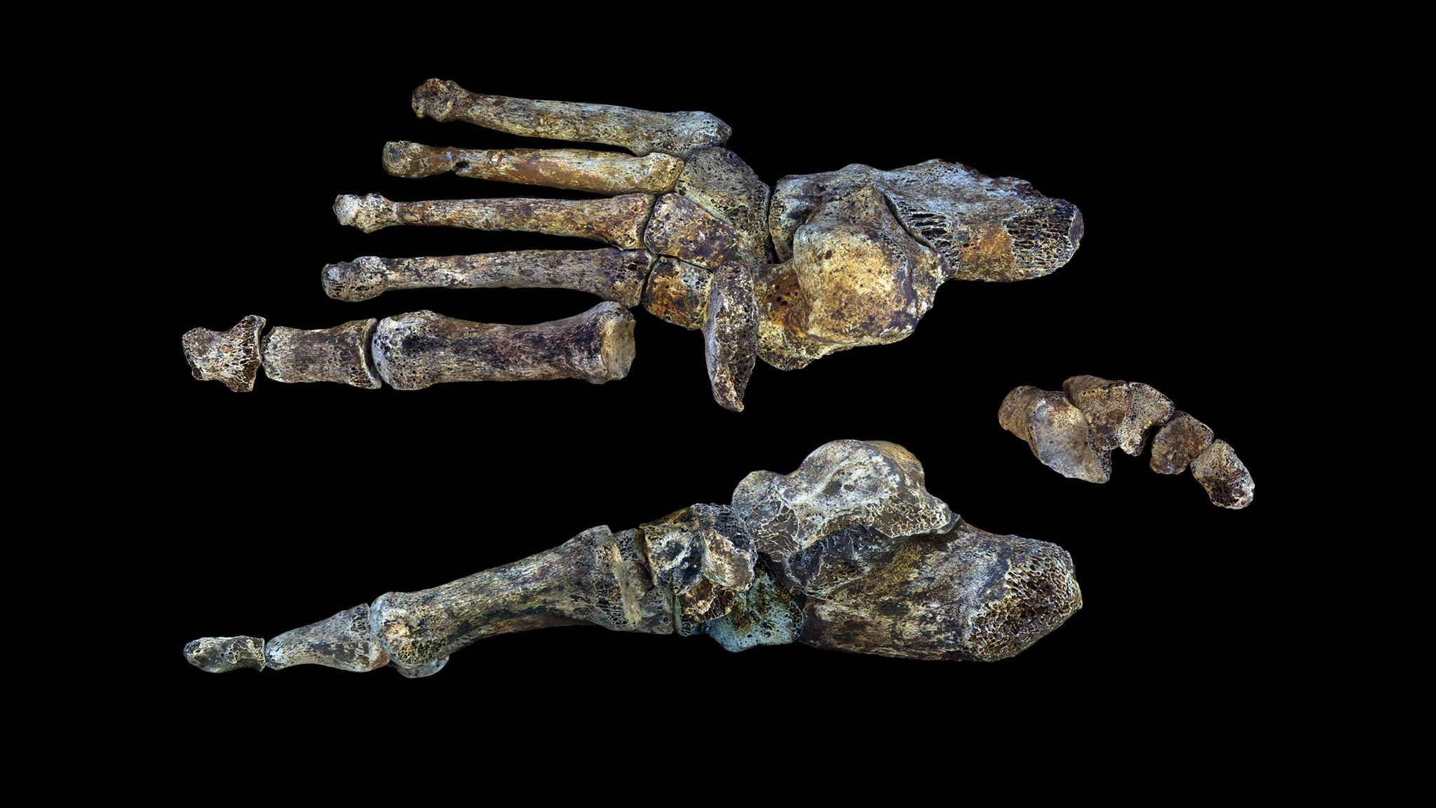 06-homo-naledi-foot-figure-peter-schmid-cc-by