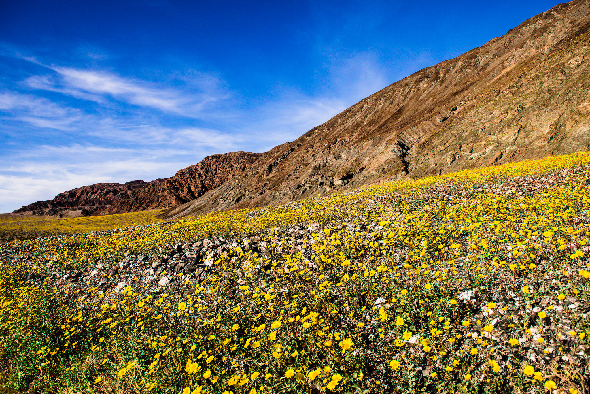 Death Valley Is Now Exploding With Color Thanks to a Freak October Storm — NO