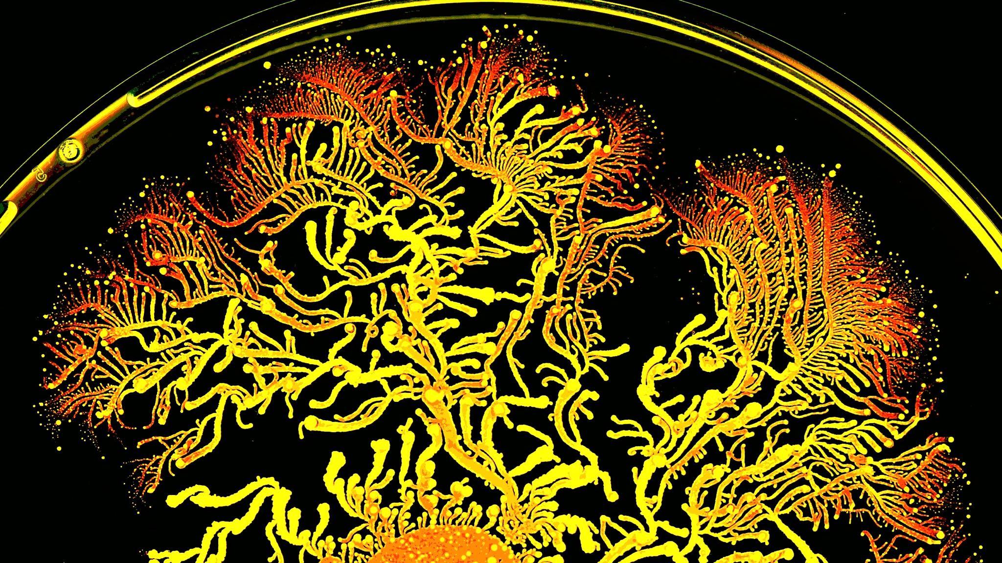 antibiotic resistance research paper