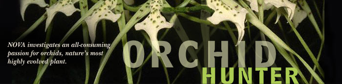 Orchid Hunter: NOVA investigates an all-consuming passion for orchids, nature's most highly evolved plant.
