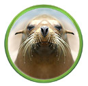 Smart Sea Lions and Talking Walruses