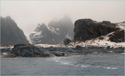Elephant Island littered with penguins