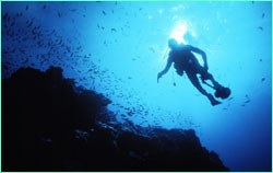 Cocos Island was recently ranked as the number-one spot in the Pacific Ocean for advanced scuba diving.