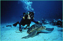 Michele Hall gets friendly with a green turtle.