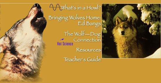Wild Wolves (see bottom of page for text navigation links)