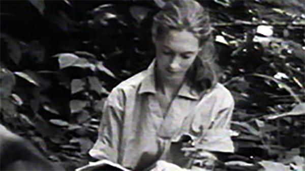 Jane Goodalls Wild Chimpanzees Jane Goodalls Story Nature Pbs
