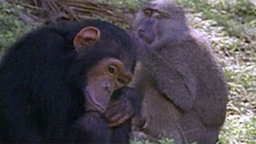 Our Closest Relatives