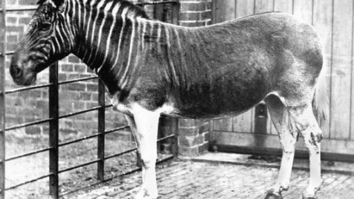 Restoring the Quagga