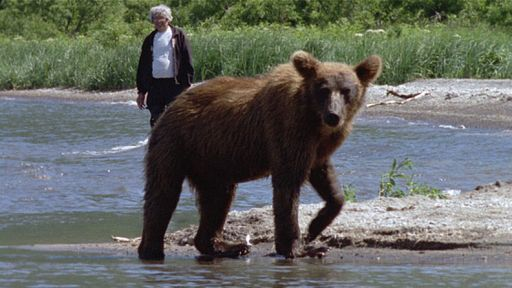 Grizzly Reintroduction