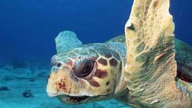 essay on turtle