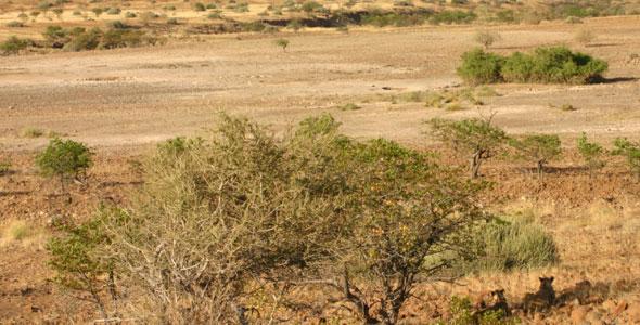 The Desert Lions | Secrets of Survival: Life in the Namib Desert ...