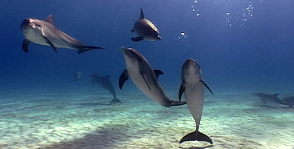 The Dolphin Defender | Dolphins and Sounds | Nature | PBS