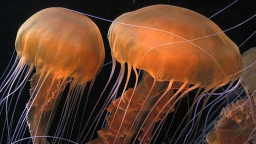 The Fascinating World of Jellies