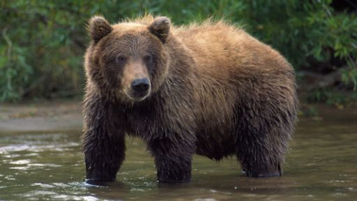 The Good, the Bad, and the Grizzly | What to Do if You Encounter a