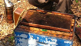 Update on Colony Collapse Disorder (Oct. 2007)