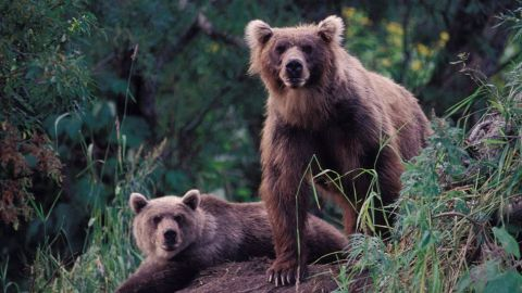 Nature The Good The Bad And The Grizzly