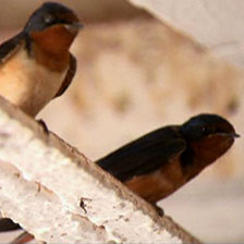 More than 90 percent of bird species form lasting pair bonds with their mates.