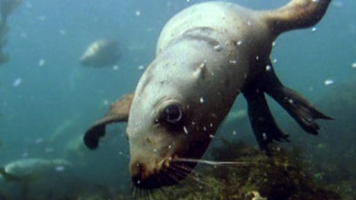Seals | Nature | PBS