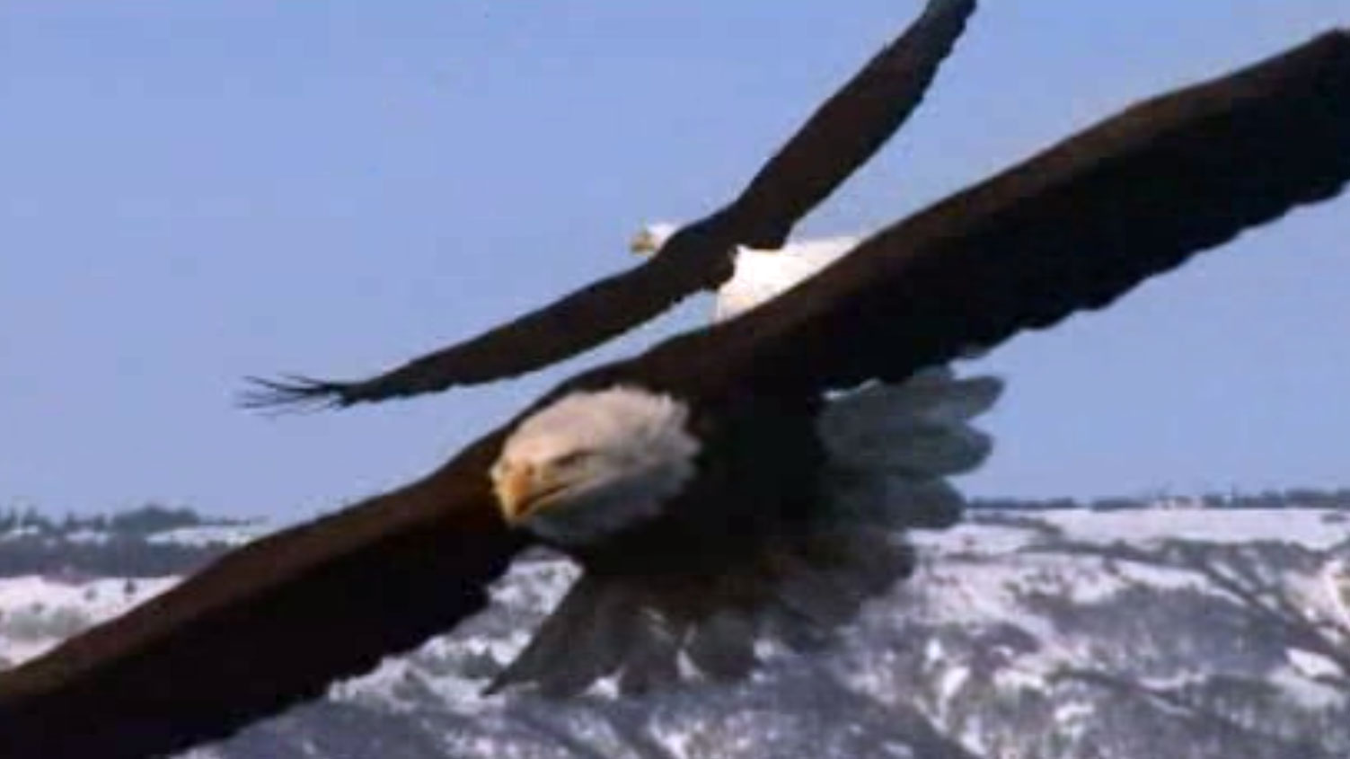 American eagle full episode nature pbs sneak peek biocorpaavc