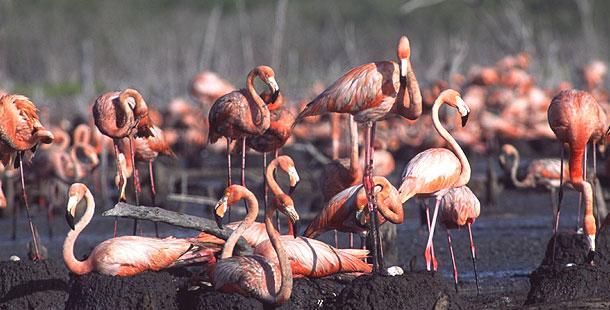 Caribbean Animals: Cuba: Wild Island Of The Caribbean