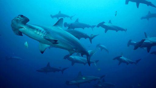 Shattering Shark Myths